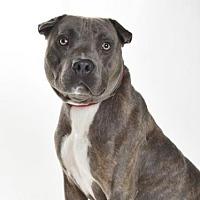 Adopt A Pet :: BATMAN - Burbank, CA