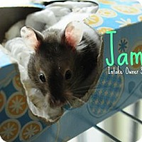 Adopt A Pet :: James - Hamilton, ON