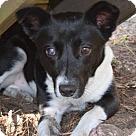 Adopt A Pet :: Mattea - ADOPTION PENDING!!