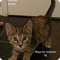 Adopt A Pet :: Savannah - Marlboro, NJ