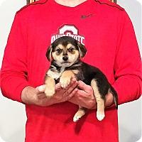 Adopt A Pet :: Charlie - New Philadelphia, OH
