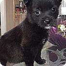 Adopt A Pet :: Seven Dwarfs Happy