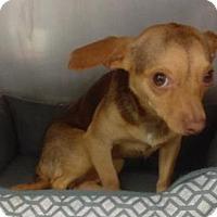 Adopt A Pet :: Liala - Decatur, GA