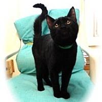 Adopt A Pet :: Carmel - Shelton, WA