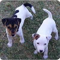 Adopt A Pet :: BLUTO & OLiVE - Phoenix, AZ