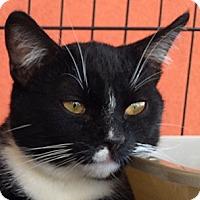 Adopt A Pet :: Gallardo - Winchester, CA