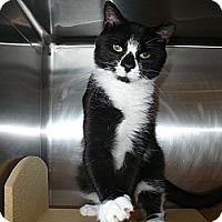 Adopt A Pet :: Trinitee - Colmar, PA
