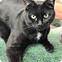 Adopt A Pet :: Steve - Chesapeake, VA