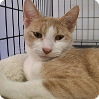 Adopt A Pet :: Nala - Oxford, NY