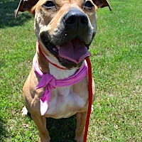 American Pit Bull Terrier Mix Dog for adoption in Dallas, Georgia - Momma