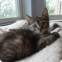 Adopt A Pet :: Tabitha-Adoption Pending! - Colmar, PA