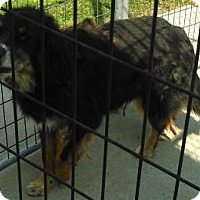 Adopt A Pet :: Cash - Mount Carroll, IL