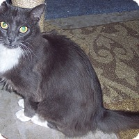 Adopt A Pet :: Countess - brewerton, NY