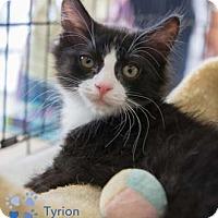 Adopt A Pet :: Tyrion - Merrifield, VA