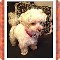 Adopt A Pet :: Adopted!!Stetson - S. TX - Tulsa, OK