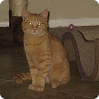 Adopt A Pet :: Fred Weesley - Glendale, AZ