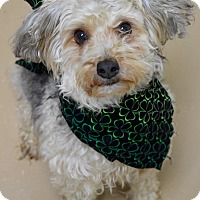 Adopt A Pet :: Carson - Dublin, CA