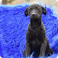 Adopt A Pet :: Lexi - Groton, MA