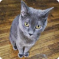 Adopt A Pet :: Angela - New York, NY