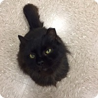 Adopt A Pet :: Fuzzle - Byron Center, MI