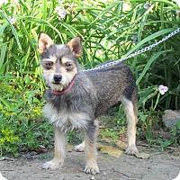 Adopt A Pet :: CHEYENNE - Hartford, CT