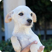 Adopt A Pet :: Kenyon - San Diego, CA