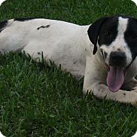 Adopt A Pet :: Frisky - Kittery, ME