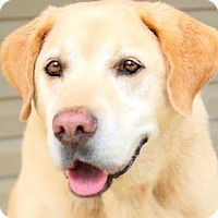 Adopt A Pet :: NOBLE(UNBELIEVABLE STORY-READ! - Wakefield, RI