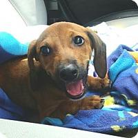 Adopt A Pet :: Kipper - Pearland, TX