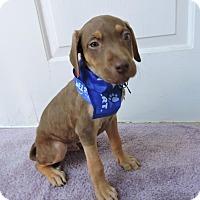 Adopt A Pet :: Leyland - Pending! - Detroit, MI