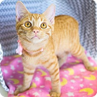 Adopt A Pet :: Flo - Montclair, CA