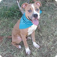 Adopt A Pet :: MERCURY - Oklahoma City, OK