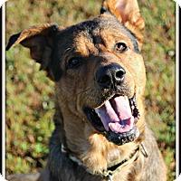 Adopt A Pet :: Zeus - Dunkirk, NY