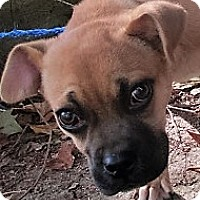 Adopt A Pet :: Willie Nelson - Germantown, MD
