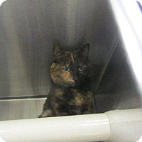 Adopt A Pet :: Isabelle - Grand Junction, CO