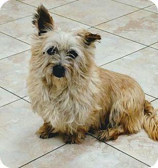 Cairn Terrier Dog for adoption in Newark, Delaware - Mackenzie