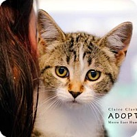 Adopt A Pet :: Red - Edwardsville, IL