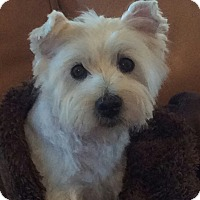 Adopt A Pet :: BRODY HAS BEEN ADOPTED - Frisco, TX