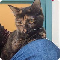 Adopt A Pet :: Lily - Irwin, PA