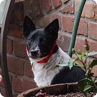 Adopt A Pet :: Carmen - Phoenix, AZ