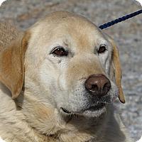 Adopt A Pet :: Bobo - Towson, MD