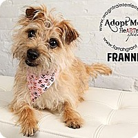 Adopt A Pet :: Frannie-Pending Adoption - Omaha, NE
