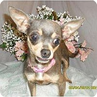 Adopt A Pet :: Piper - Chandlersville, OH