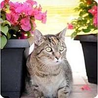 Adopt A Pet :: Toni - Orlando, FL