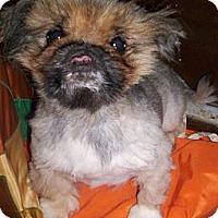 Adopt A Pet :: Micah - Apex, NC
