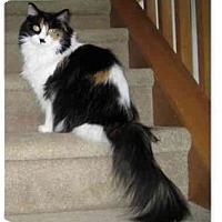 Adopt A Pet :: Bootsie - Columbus, OH