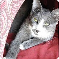 Adopt A Pet :: Aragorn (MG) - Little Falls, NJ