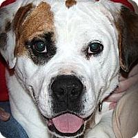 Adopt A Pet :: Sassy - Sinking Spring, PA