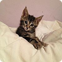 Adopt A Pet :: Circle - San Diego, CA