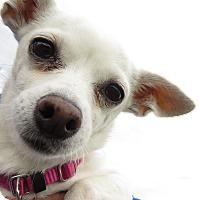 Adopt A Pet :: Emmalee - Meridian, ID